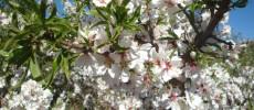 Primavera, Manipura Chakra y Crecimiento