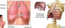 La respiración paradójica, ¿realmente dejamos que entre suficiente aire a nuestros pulmones?