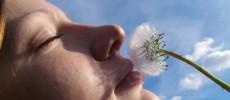 Las alergias y la energía defensiva