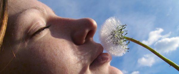 tratamiento de alergias con medicina china   acupuntura y fitoterapia