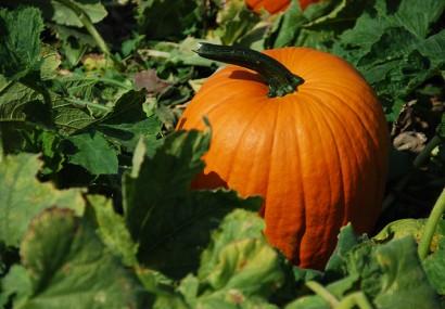 La energía del otoño y la alimentación
