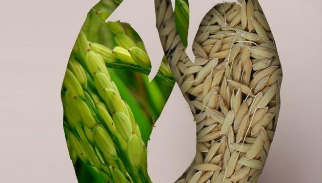 Equilibrando la energía femenina a través de la alimentación energética