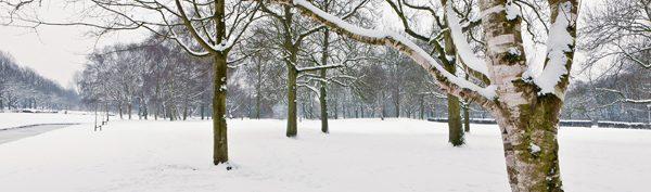 Cultivar la salud en invierno