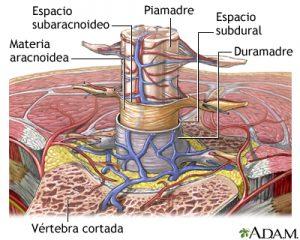 meninges-scn-medline