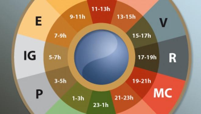 El reloj biológico de nuestro cuerpo | Acupuntura en Instituto ...
