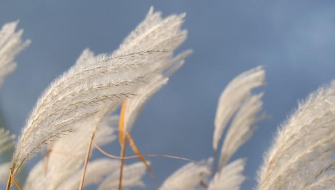 El concepto 'viento' en la Medicina Tradicional China